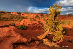 Capitol Reef National Park - Pix on Trips