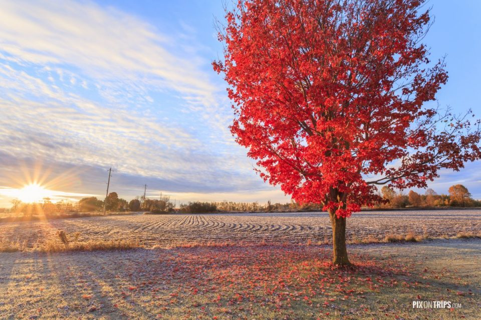 Fall colors at sunrise in rural Canada - Pix on Trips