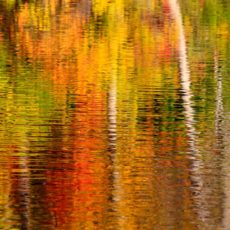 Abstract of fall colour reflections - Pix on Trips