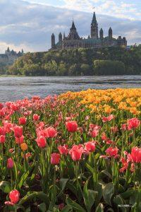 Ottawa Tulip Festival - Pix on Trips