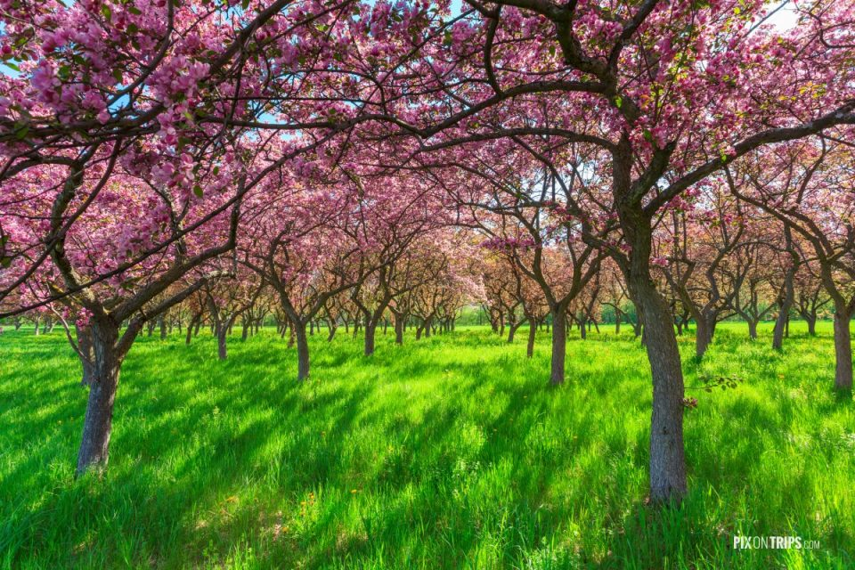 Spring Blossom trees - Pix on Trips