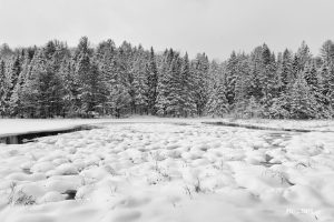 Winter landscape of a wilderness park - Pix on Trips