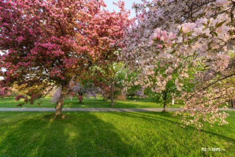 trees with colorful blossoms in Spring - Pix on Trips