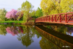 Red bridge and flowering crabapple tree in park - Pix on Trips