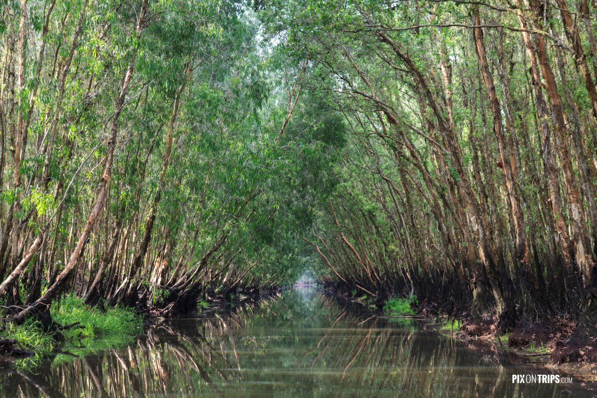 Cajeput tree tunnel and reflection in water, Tra Su Bird Sanctua - Pix on Trips