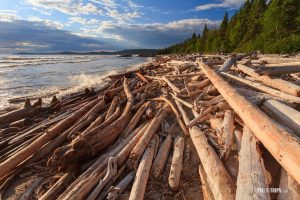 Driftwood at shore of Lake Superior - Pix on Trips
