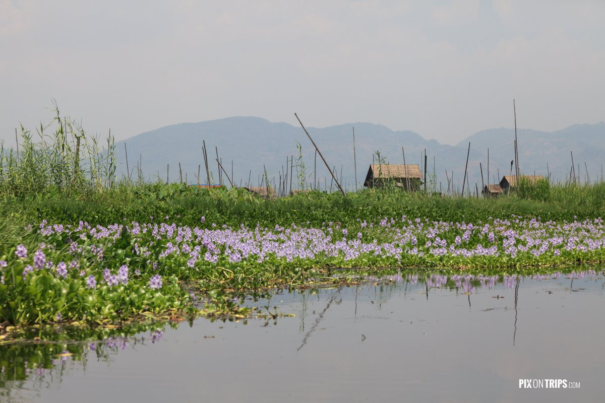 Floating gardens of Lake Inle, Myanmar - Pix on Trips