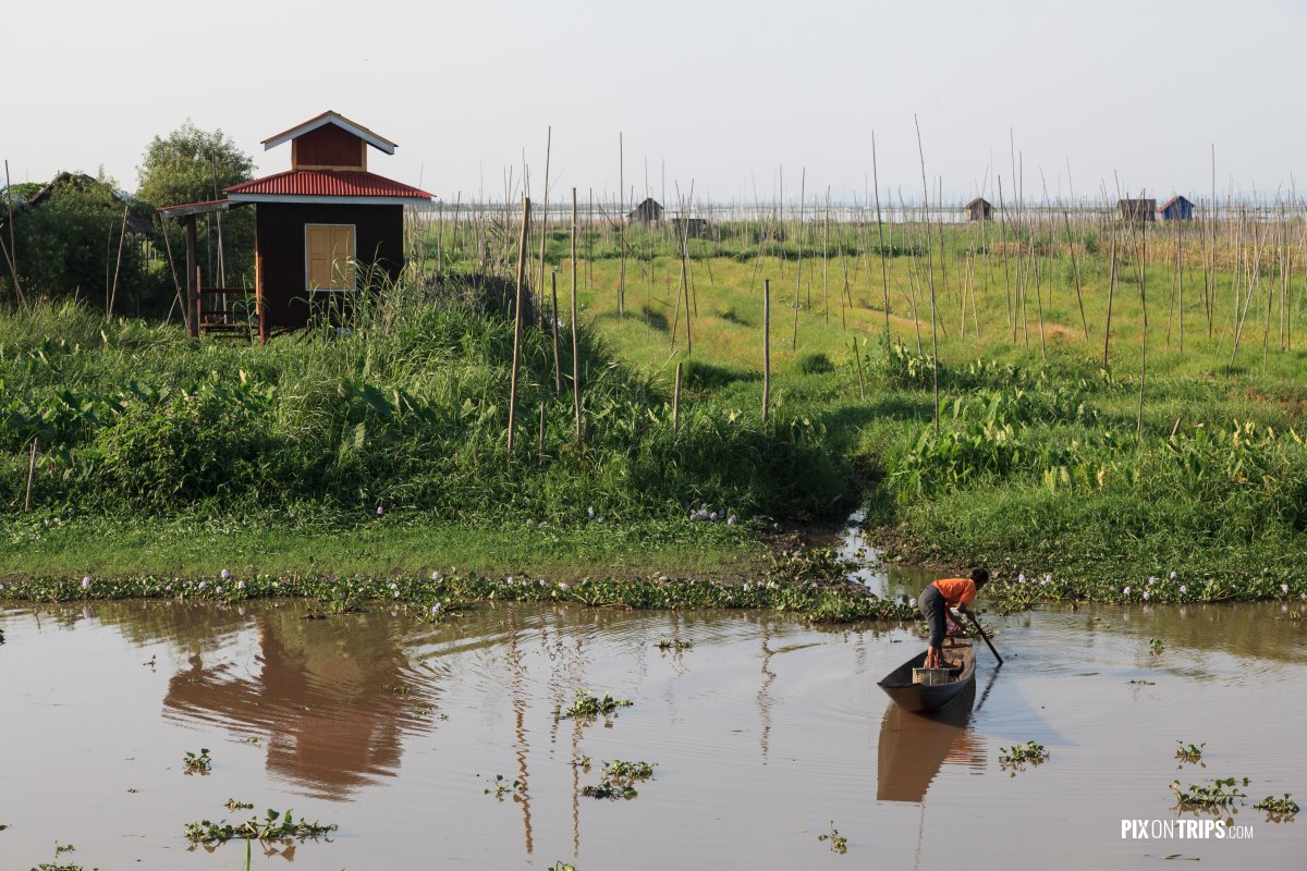 Floating gardens of Lake Inle with boat in foreground, Myanmar - Pix on Trips