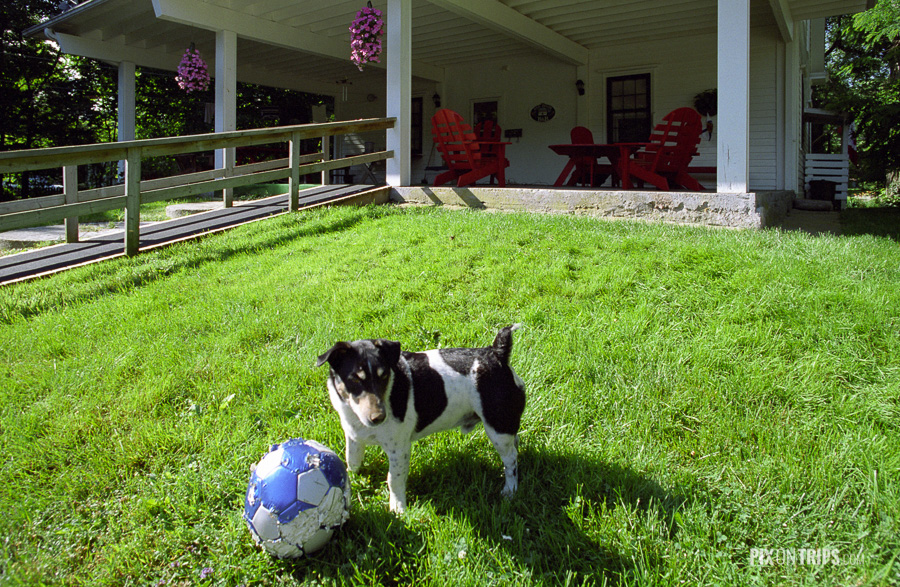 Dog and soccer ball in the back yard of Red Door B&B, Mahone Bay, Nova Scotia, Canada
