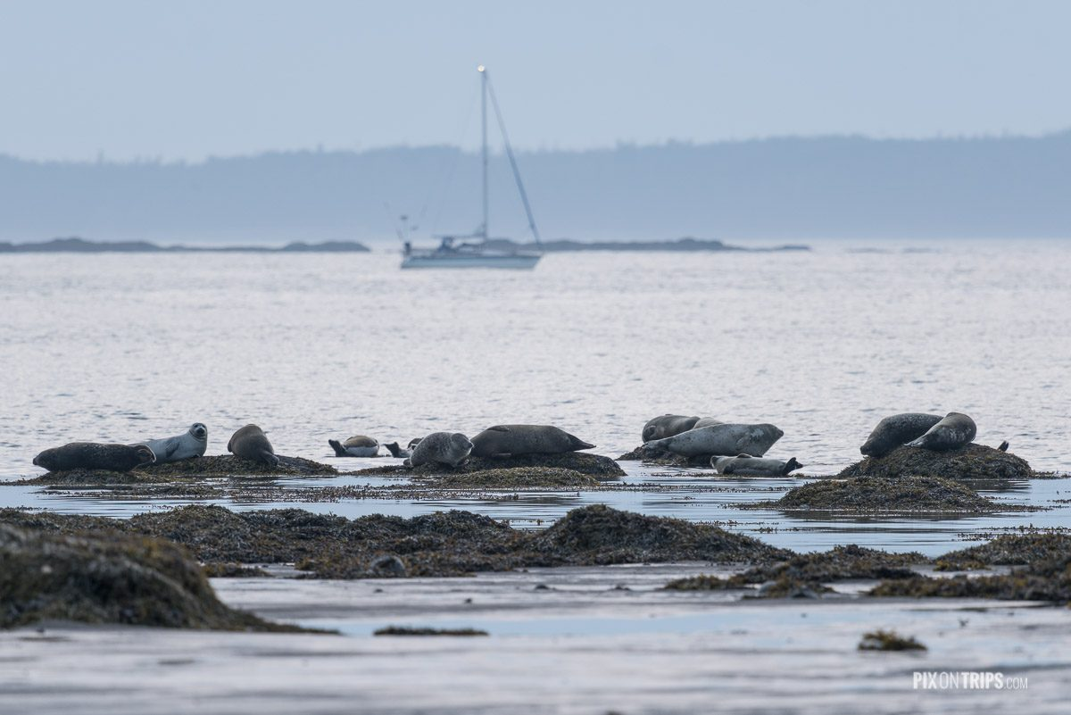 Seals resting on rocks close to shore