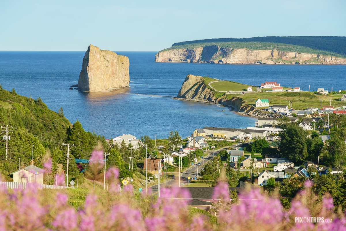 Town of Perce, Quebec in summer with pink wild flower in the foreground