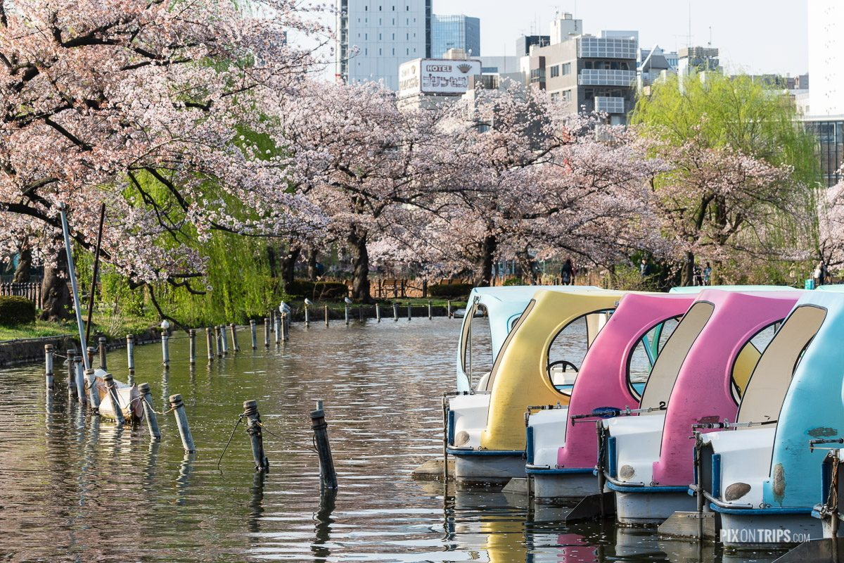 Ueno Park boat dock in spring - Pix on Trips