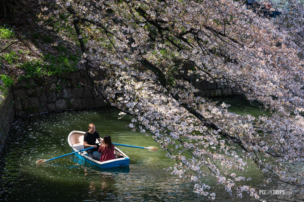 Couple peddle in the hidoriga-fuchi canal during cherry blossom season, Tokyo, Japan - Pix on Trips