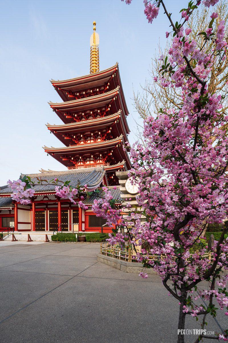 The Five-Story Pagoda at Sensoji, Asakusa, Tokyo during cherry blossom season - Pix on Trips