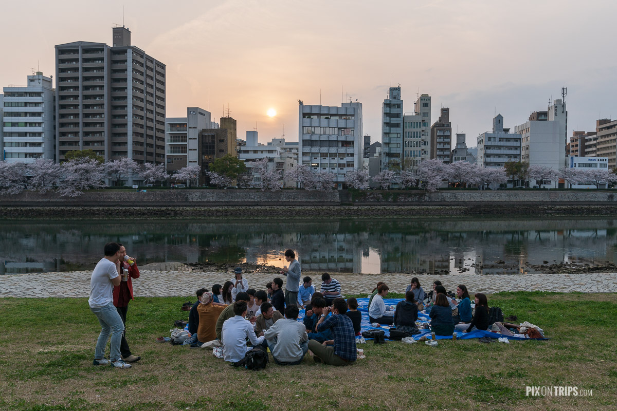 Young people gather by the river during cherry blossom season in Hiroshima, Japan - Pix on Trips