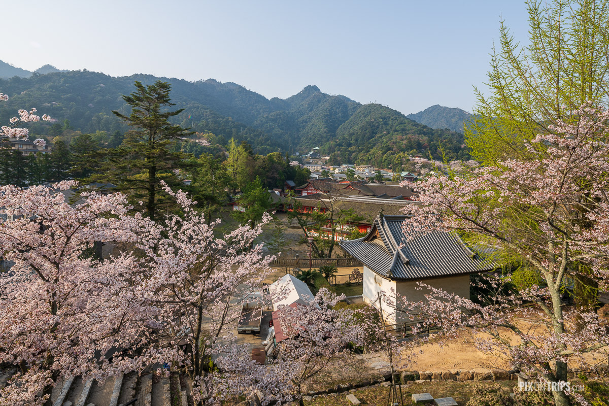 Village on the Miyajima Island during cherry blossom season, Japan - Pix on Trips