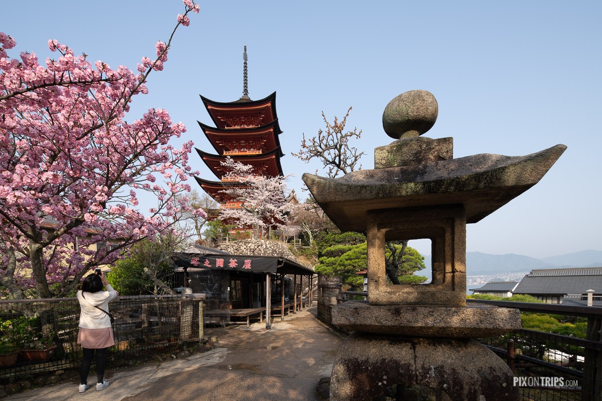Woman takes photo of the Five-Storied Pagoda in Miyajima during cherry blossom season - Pix on Trips