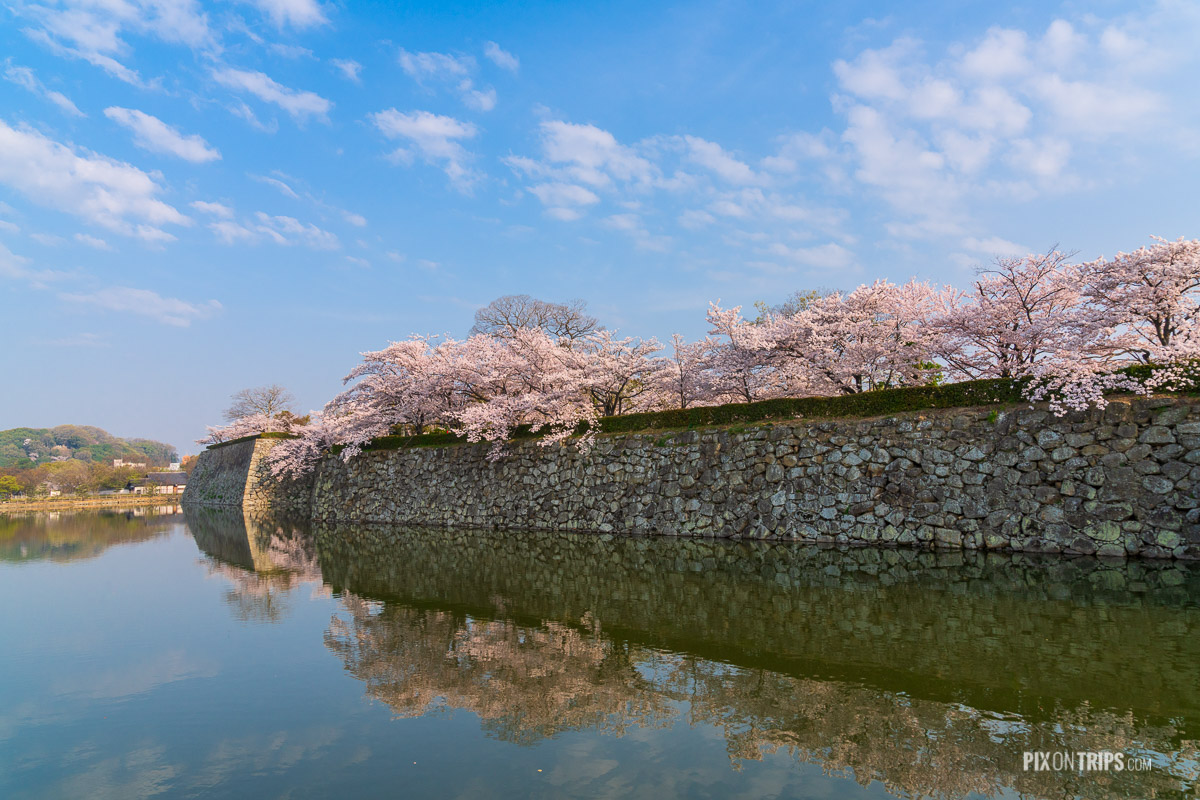 The moat and stone wall of the Himeji Castle Park during cherry blossom blooming season - Pix on Trips