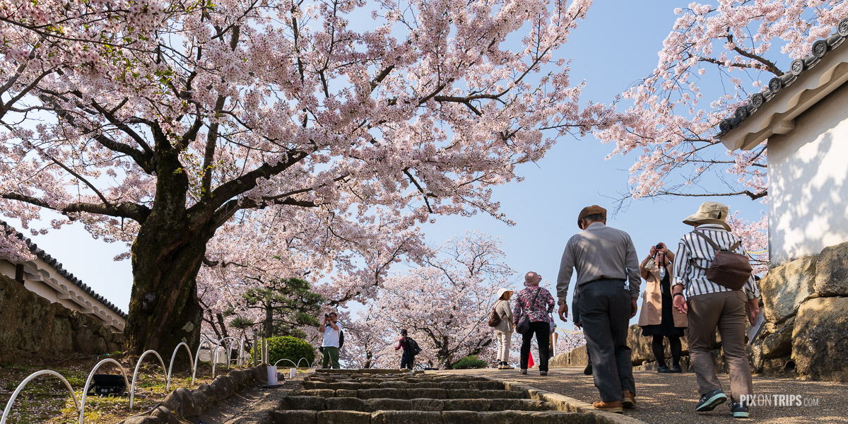 Cherry blossom trees in the Himeji Castle Park - Pix on Trips