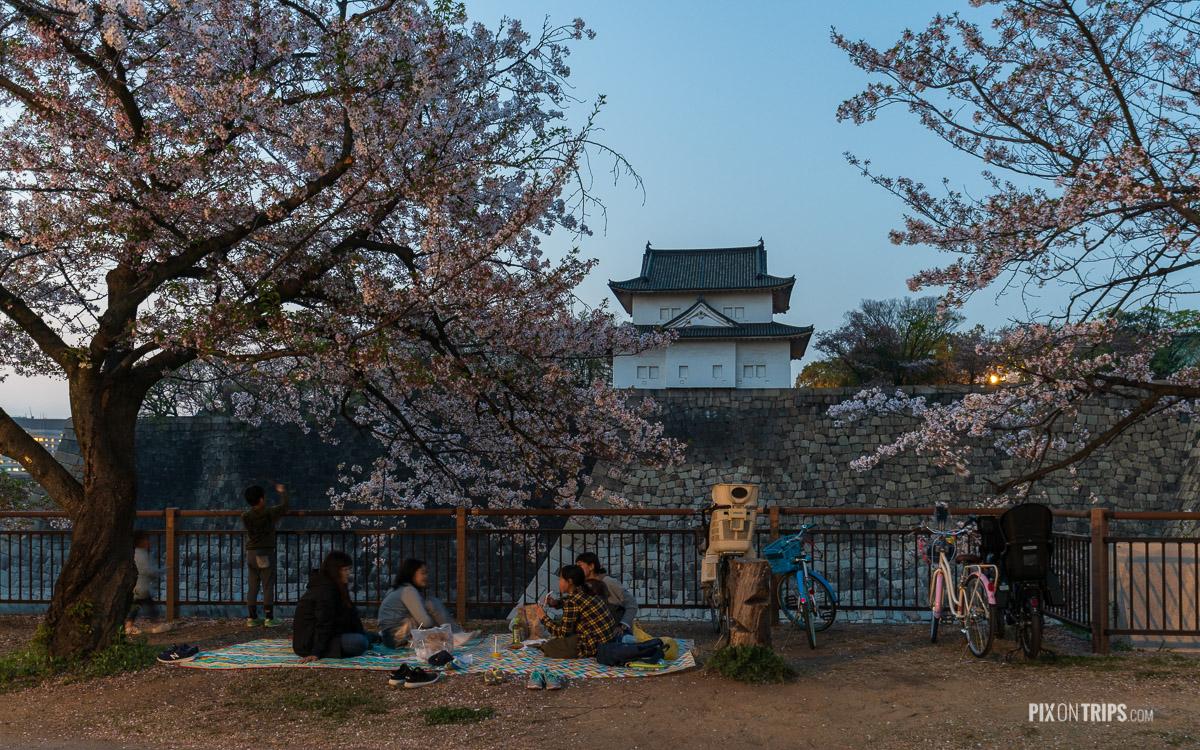 Evening hanami party under cherry blossom trees at Osaka Castle Park, Japan - Pix on Trips
